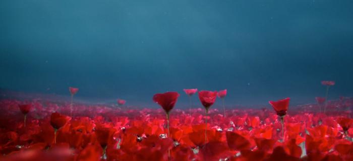 BG-Flowers-1